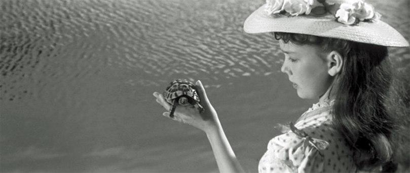 turtle innocents